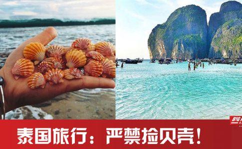 为什么说去泰国旅游,千万不能去捡海边的贝壳?